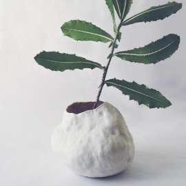 Seed, vase or pot for plant